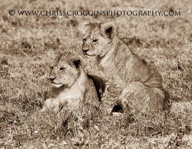 Two Lion Cubs. Ndutu, Tanzania.