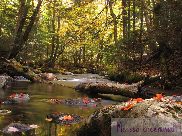 "Stanley Horowitz said it best: ""Winter is an etching, spring a watercolor, summer an oil painting and autumn a mosaic of them all.""  Smarts Brook, Thornton, NH."