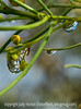 Water drops after the rain