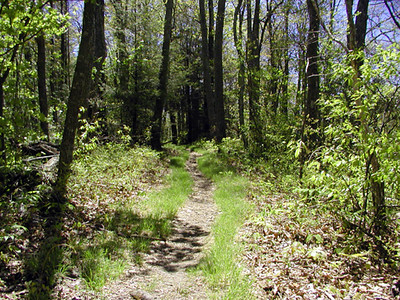 The manway leading from Cove Mtn. Firetower back to Little Greenbrier Gap GSMNP May 8 2007