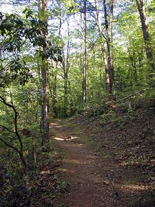Little Greenbrier Trail framed in mountain laurel.