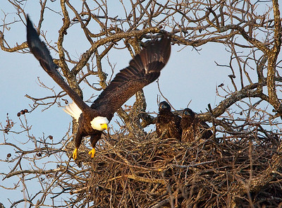 Llano Eagles-3850
