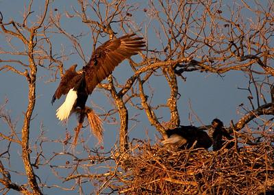 Llano Eagles-3831
