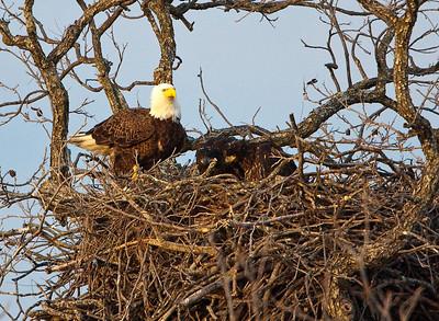 Llano Eagles-3844