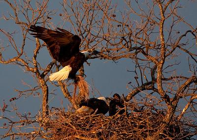 Llano Eagles-3833