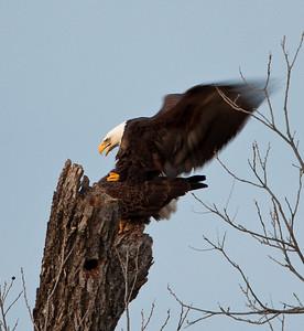 Llano Eagles-3806