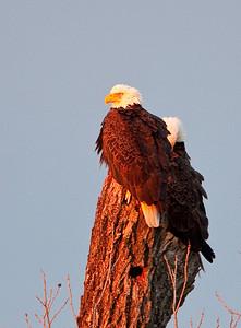 Llano Eagles-3815