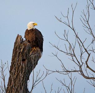 Llano Eagles-3859
