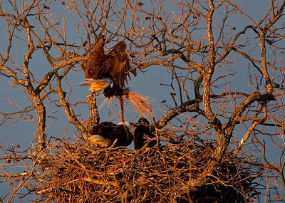 Llano Eagles-3834
