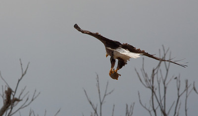 Llano Eagles-7313