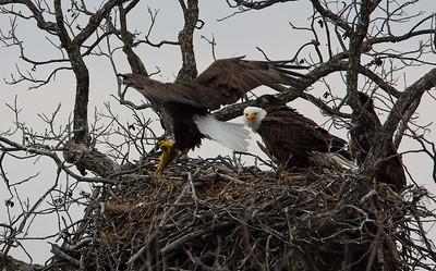 Llano Eagles-7383