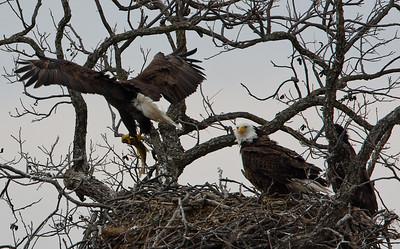 Llano Eagles-7385