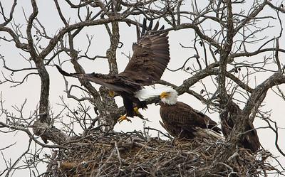 Llano Eagles-7389
