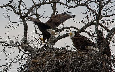 Llano Eagles-7384