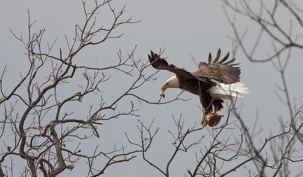 Llano Eagles-7315