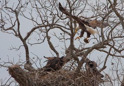 Llano Eagles-7318