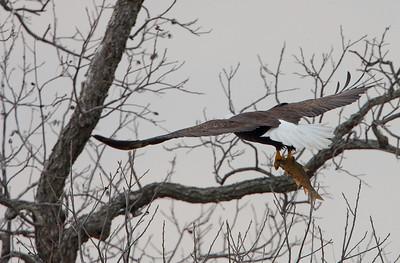 Llano Eagles-7379