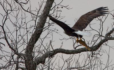 Llano Eagles-7380