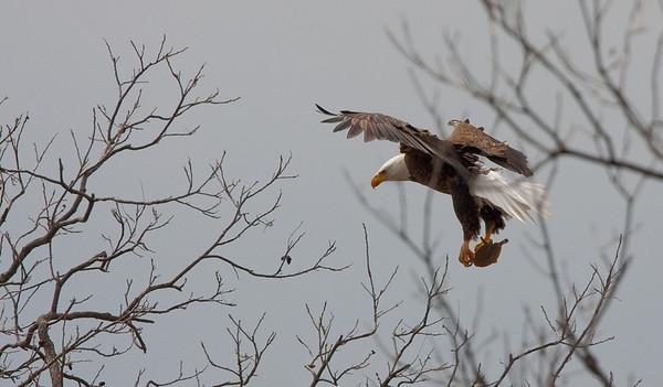 Llano Eagles-7314