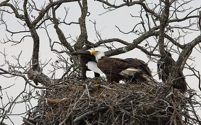 Llano Eagles-7399