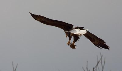 Llano Eagles-7312