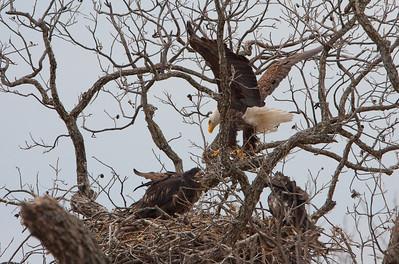 Llano Eagles-7319