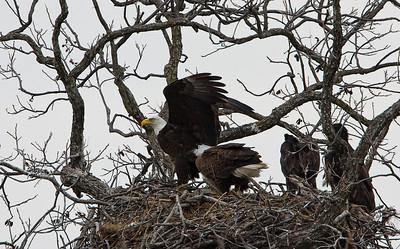 Llano Eagles-7415
