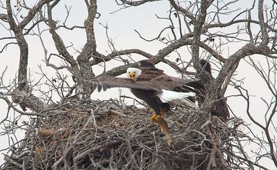 Llano Eagles-7381