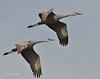 Llano Seco Cranes 17 _pp