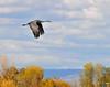 Llano Seco Cranes 09 _pp