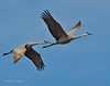 Llano Seco Cranes 16 _pp