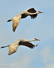 Llano Seco Cranes 14 _pp