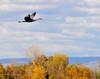 Llano Seco Cranes 08 _pp