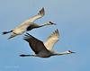 Llano Seco Cranes 13 _pp