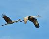 Llano Seco Cranes 15 _pp
