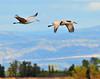 Llano Seco Cranes 04 _pp