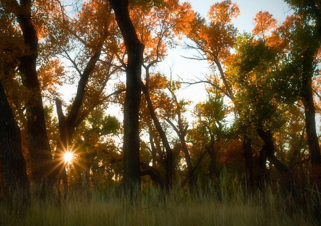 Sunset Through Cottonwoods<br /> Two Moon Park