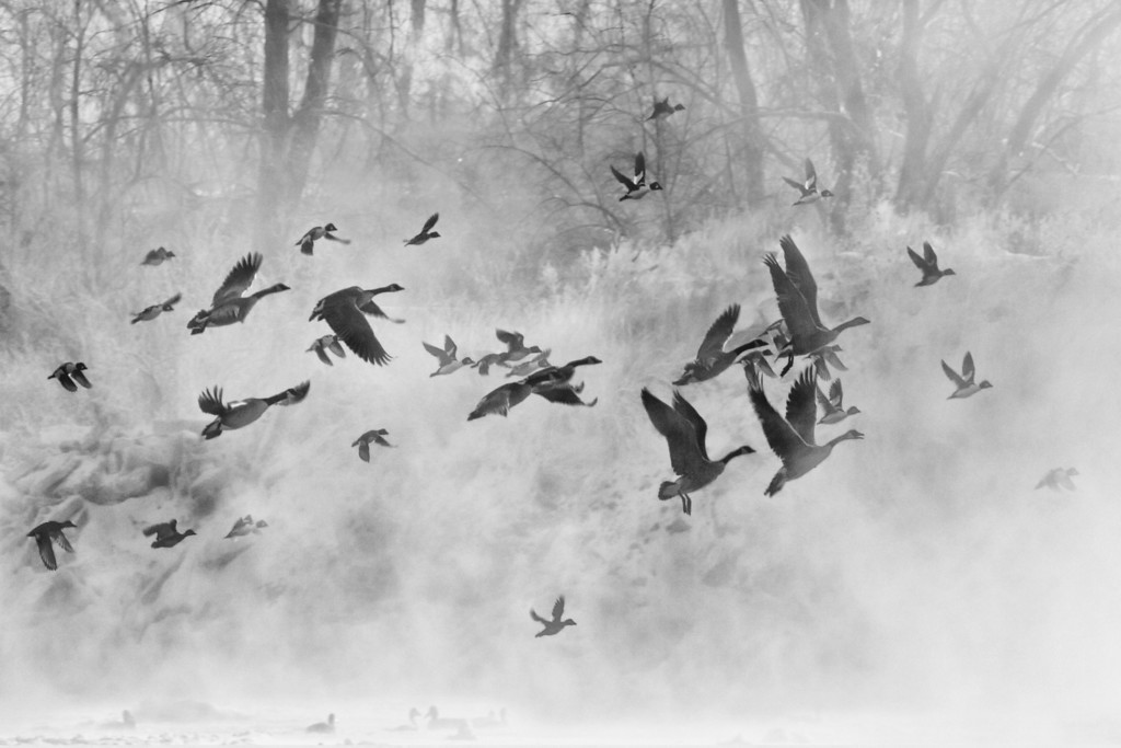 Flying Through the Mist - Yellowstone River<br /> Two Moon Park, Billings, MT