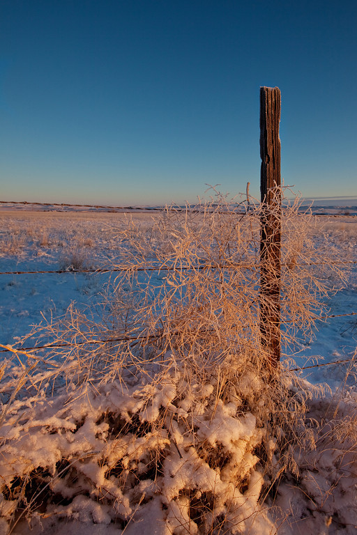 Fence, Weeds, and Snow - Billings Heights