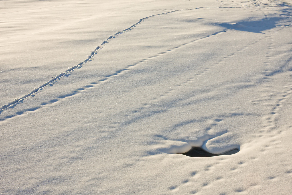 Tracks<br /> Yellowstone River at Two Moon Park