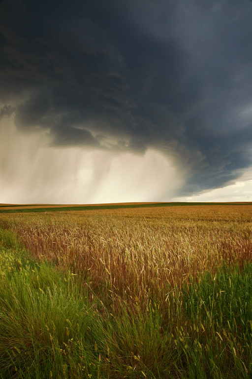 Storm Over Wheat Field II, Billings, MT