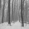 Snow squall, Towner's Woods, new trail