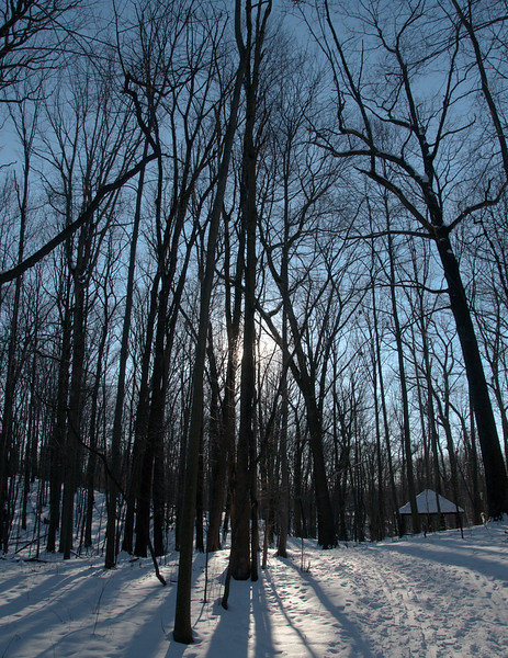 Towner's Woods not far from parking lot