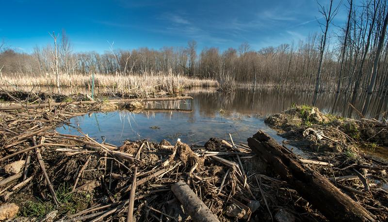Beaver pond, Breakneck Creek Preserve.