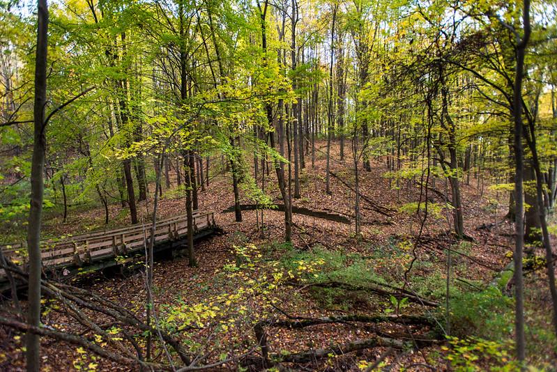 Towner's Woods at dawn, lake trail.
