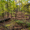Towner's Woods at dawn, lake trail.
