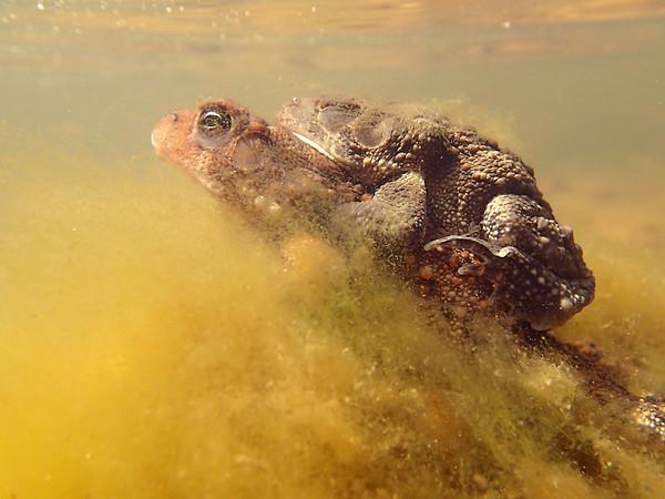 Toads gone wild