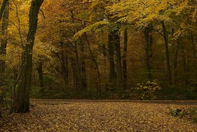 Local woods in autumn