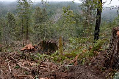 Logging near sag pond area off of E Ridge Rd