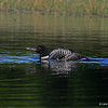 Loon in low to water pose.